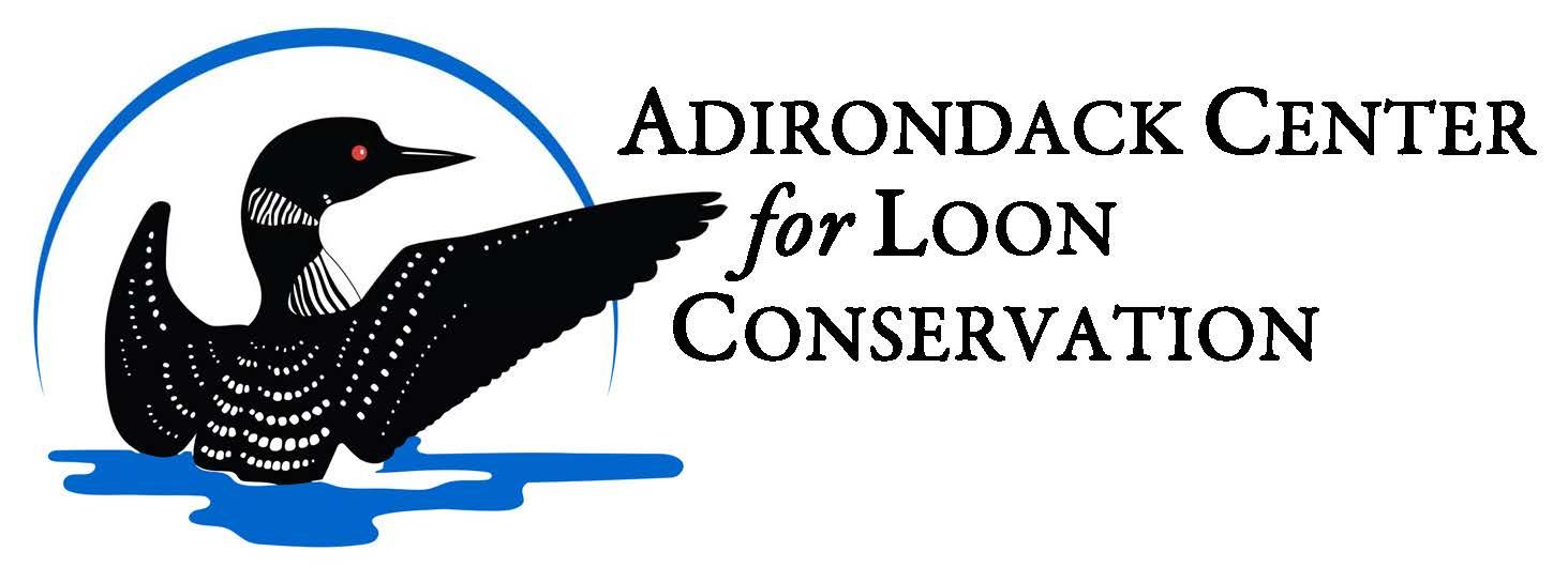 Adirondack Loons
